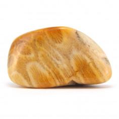 Corail fossile d'agate 3 à 3,5 cm, 10 à 15 g
