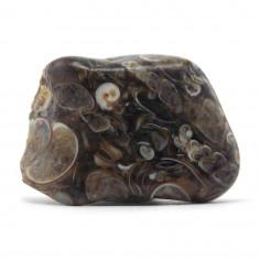 Agate coquillage 2 à 2,5 cm, 5 à 10 g (Agate turitelle)