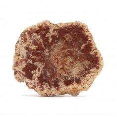 Tranche de Bois fossile 30,6g pièce unique